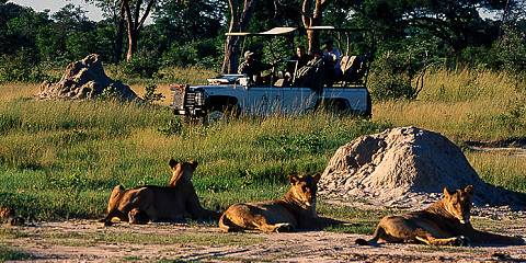 1-Day Hwange Full Day Trip - Daily from Victoria Falls