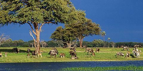 13-Day Uganda Tanzania & Kenya Combined Safari
