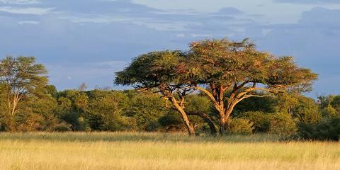 6-Day Uganda Gorillas & Savannah Safari