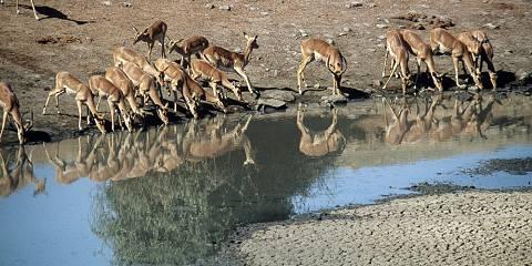 7-Day Etosha National Park Classic Safari