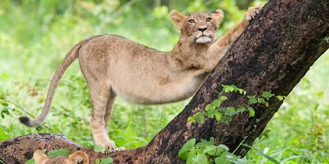 16-Day Shell's Signature Wildlife Explorer