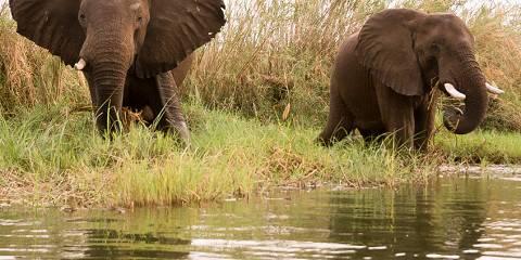 4-Day Tamarind Canoe Safari - Mana Pools