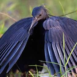 birding lake manyara birds of lake manyara national park