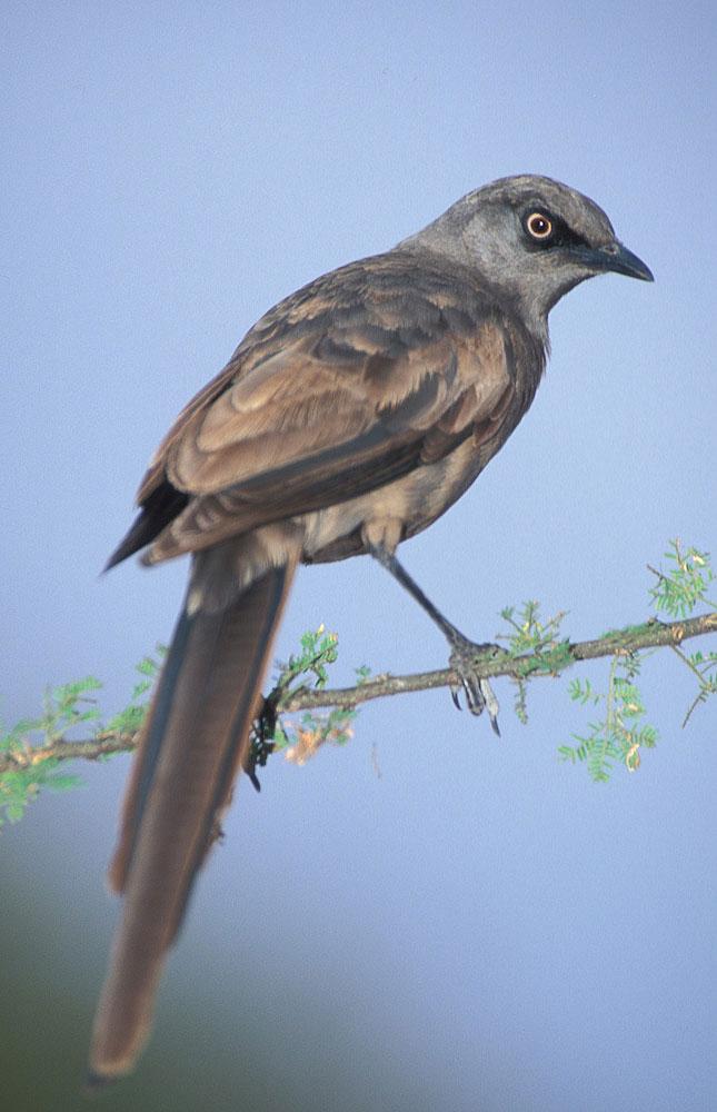 Expert Rating Reviews >> Birding Tanzania – Birds of Tanzania