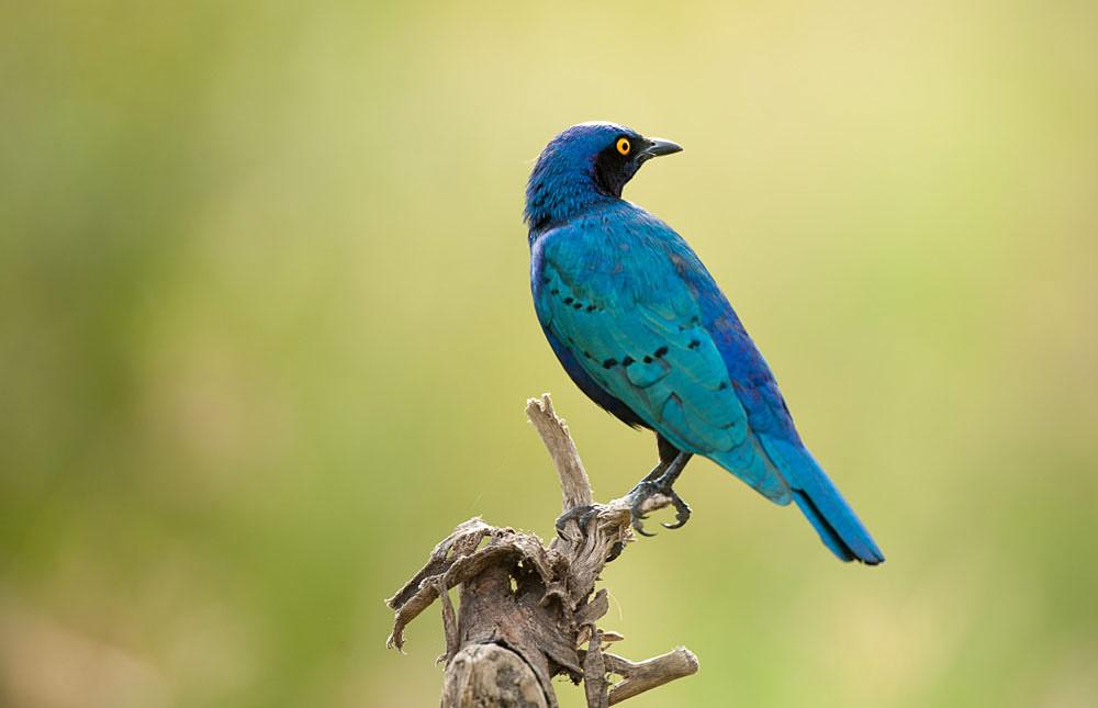 Expert Rating Reviews >> Birding Lake Nakuru – Birds of Lake Nakuru National Park