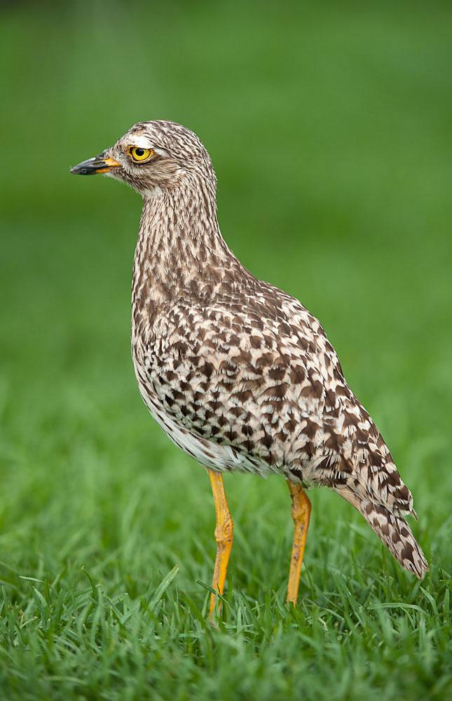 Opazovanje ptic Pilanesberg Birds Of Pilanesberg Game Reserve-2068