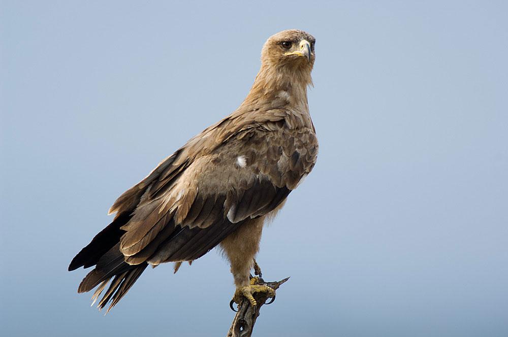 Birding Tarangire Np Birds Of Tarangire National Park