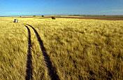 9-Day Makgadikgadi, Moremi, Okavango & Chobe Experience
