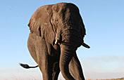 10-Day Northern Highlights Mobile Tented Safari