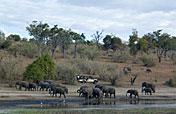 9-Day Best of Botswana Mobile Safari