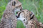 7-Day Sweet Honeymoon Safari