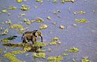 Okavango Delta Wildlife Photos