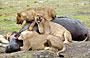 4-Day Affordable Kruger National Park by Road