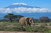 Amboseli NP Photos
