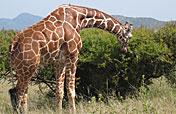 16-Day Magical Secret of Kenya Adventure & Beach Holiday