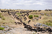 8-Day Big 5 & Great Migration Tanzania mid-Range Safari