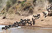 10-Day Africa Wild Samburu Nakuru Maasai Mara Amboseli