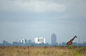 1-Day Nairobi National Park