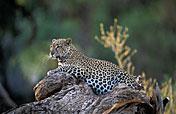 Samburu NR Photos