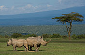 8-Day The Best of Kenya Wildlife Safari