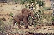 7-Day Kenya Exclusive Safari