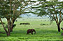 6-Day Masai Mara, Lake Nakuru and Amboseli Great Safari