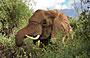 3-Day Amboseli Camping