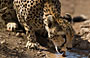 5-Day Masai Mara/ Nakuru/Naivasha Daily Joining Safari