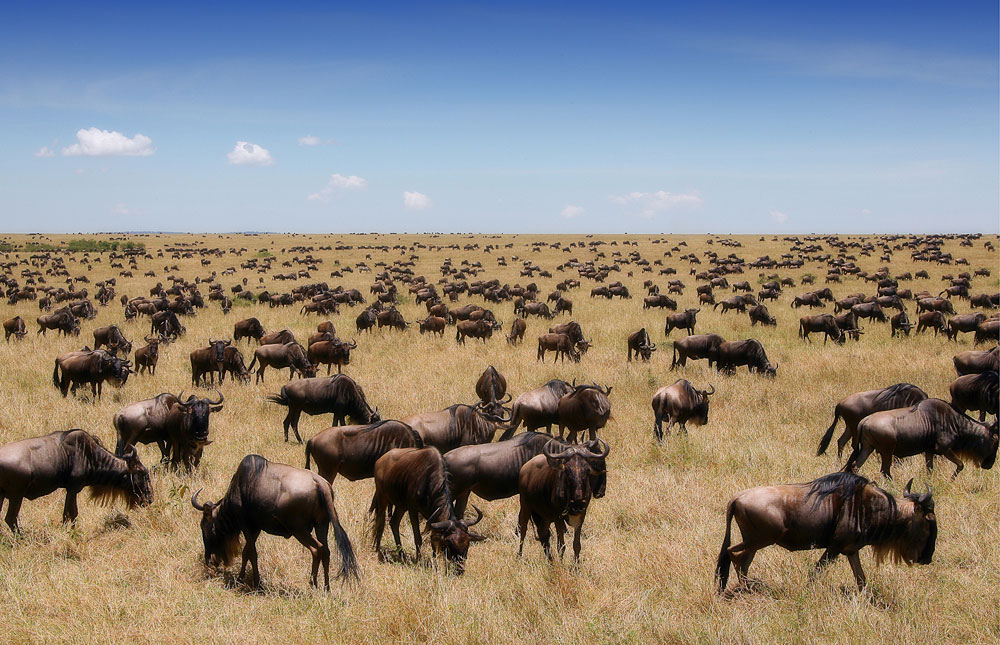 National Geographic Tours Africa >> Masai Mara National Reserve – Travel Guide, Map & More!