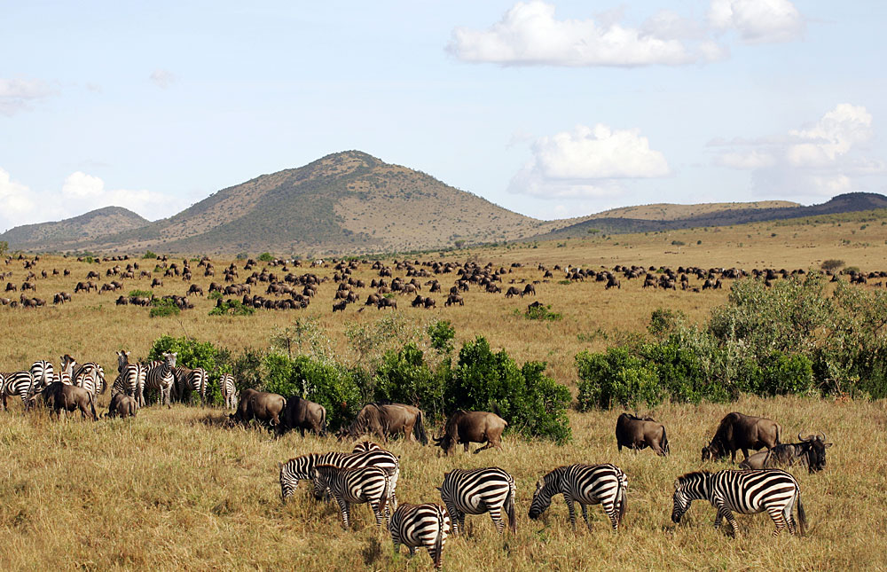 Image result for maasai mara national reserve