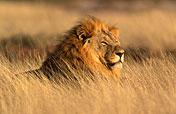 3-Day Etosha Explorer Namibia Safari