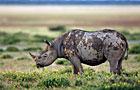 Etosha NP Wildlife Photos