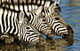 5-Day Fly-in Private Lodge Kruger Safari (All-Inclusive)