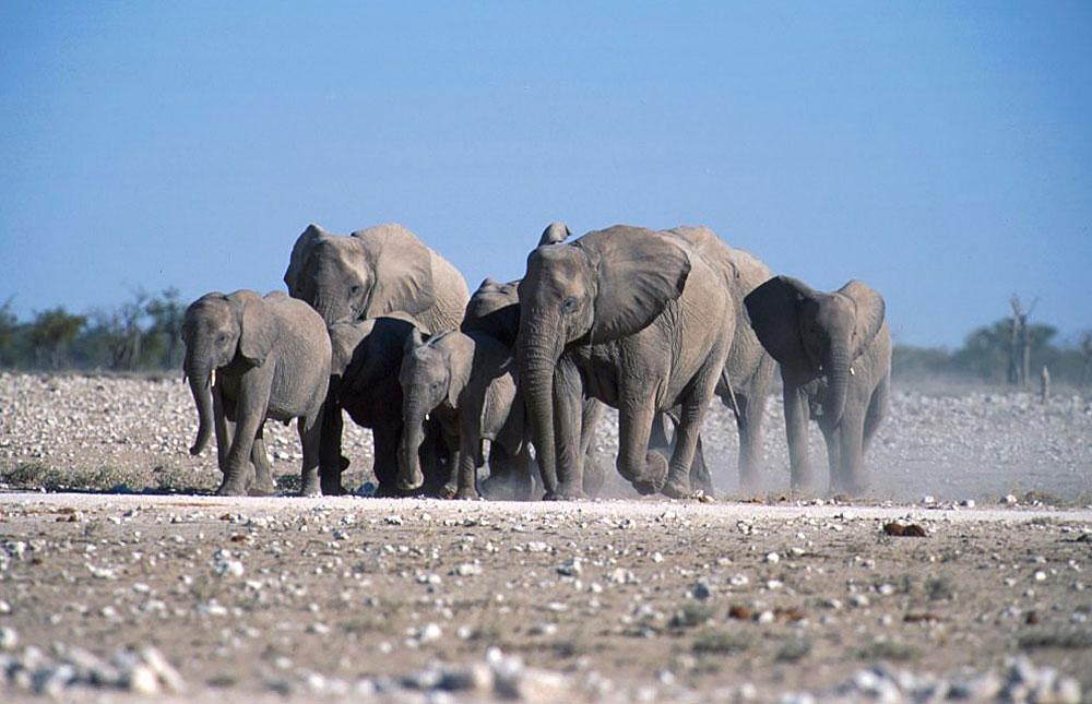 Etosha Nationalpark - Visit this popular wildlife park in ...