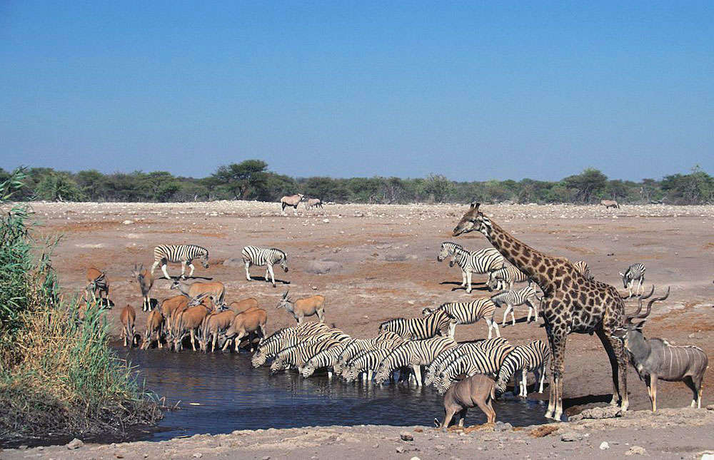 Bradt Travel Guide Namibia