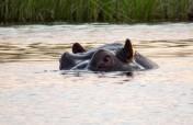 4-Day Muchenje Chobe Adventure