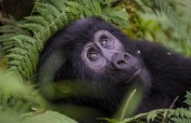 3-Day Gorilla Tracking & Lake Mutanda Tour