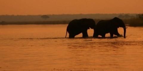 2-Day Chobe Elephant Camp Safari