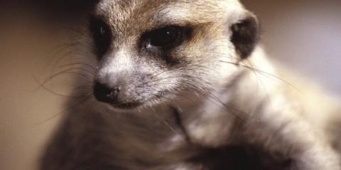 10-Day Namibia Wildlife Safari, Including Damaraland