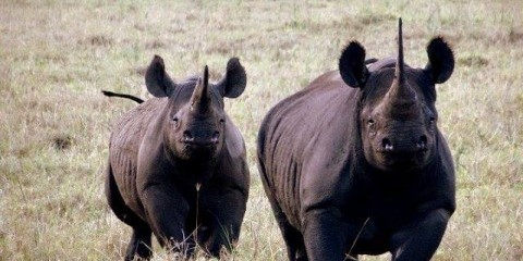 4-Day Safari to See Greats Migration
