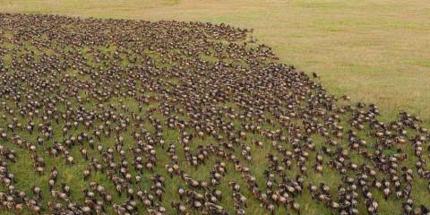 4-Day Lake Ndutu to See Calving Season