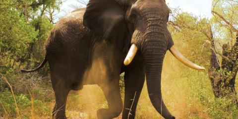 4-Day Tembe Elephant Park Safari - Self-Drive