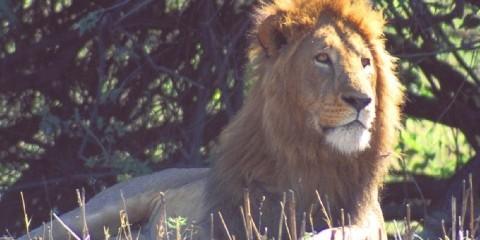 8-Day Namibia Wildlife Safari