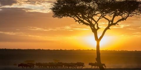 10-Day Luxury Northern Circuit Safari