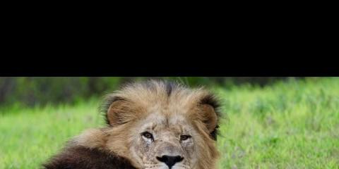 5-Day Luxury Safari