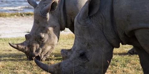 8-Day Tanzania Classic Safari in 3 Stars