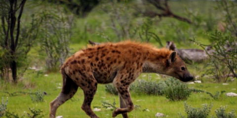 10-Day Best of Namibia Lodge Safari