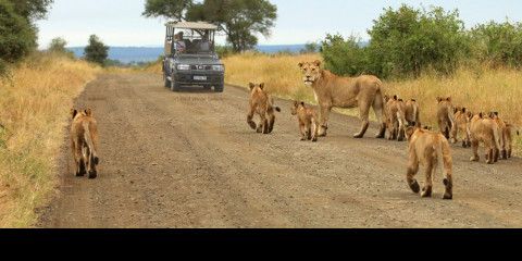 4-Day Kruger National Park Open Vehicle Safari