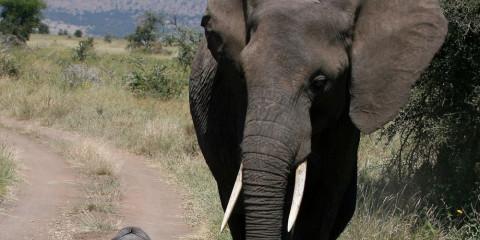 3-Day Tour to Serengeti and Ngorongoro Crater