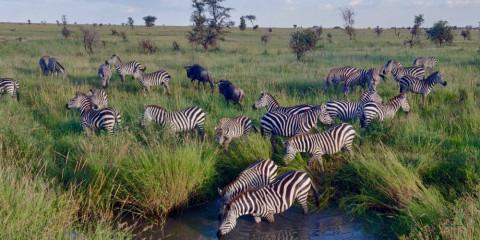 4-Day Drive & Fly Back Safari Serengeti - (310)